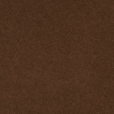 Timeless Appeal I 12' in Tortoise Shell - Carpet by Shaw Flooring