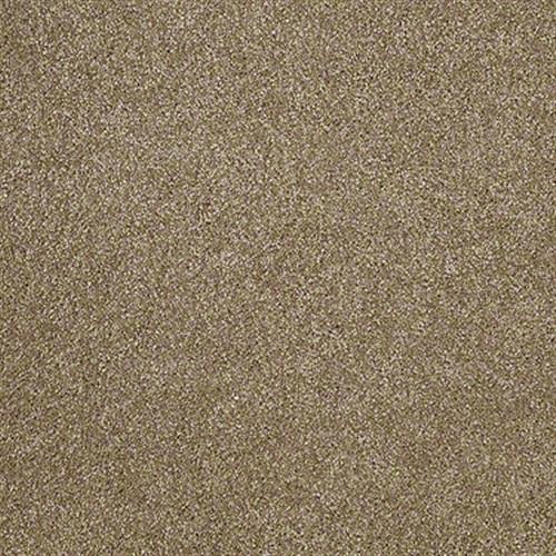 Room Scene of Xvn04 - Carpet by Shaw Flooring
