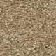 Windsurf I in Buff - Carpet by Engineered Floors