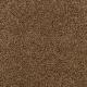 Churchill in Walnut Shell - Carpet by Mohawk Flooring