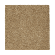 Calming Promise in Tortoise Comb - Carpet by Mohawk Flooring