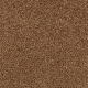 Churchill in Thoroughbred - Carpet by Mohawk Flooring