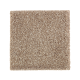 Nature's Appeal I in Mushroom Cap - Carpet by Mohawk Flooring