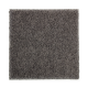 Opulent Charm in Diplomacy - Carpet by Mohawk Flooring