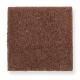 Pleasant Nature in Warm Autumn - Carpet by Mohawk Flooring
