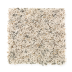 Social Circle in Coconut - Carpet by Mohawk Flooring